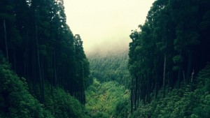 tumblr_static_trees_forest_fog_1600x900_36417_by_galaxy_goat-d8fkhej